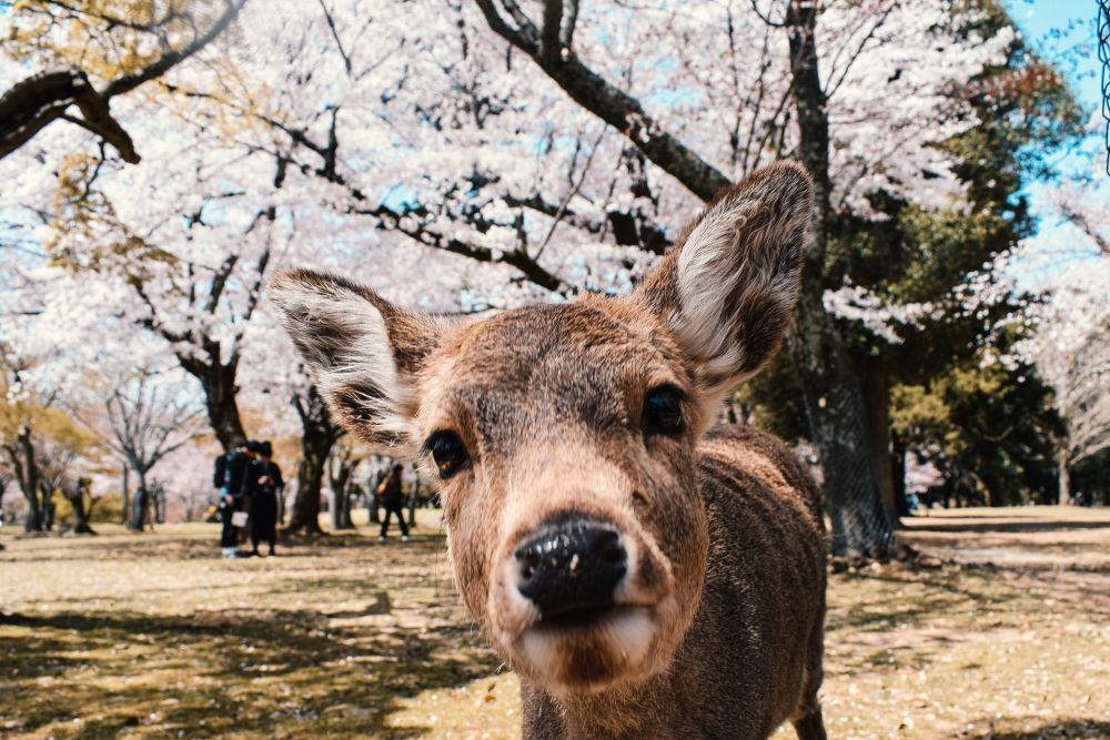 10 cosas que ver en Nara en 2019