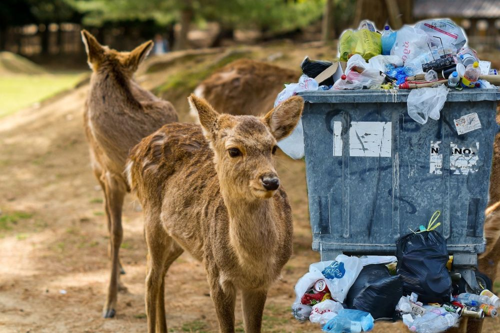 Los ciervos de Nara mueren misteriosamente