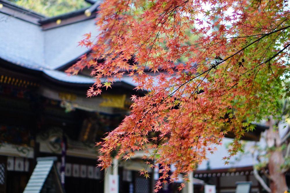 Festivales de Octubre en Japón