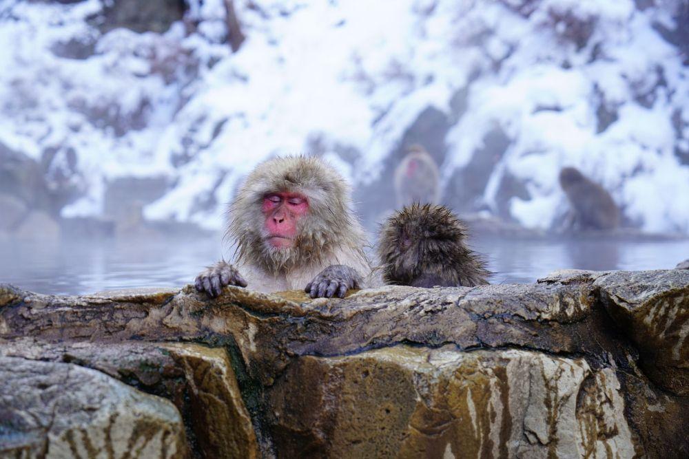 Onsen: qué es y cómo comportarse